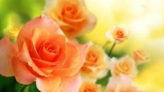 Stunning Orange Roses 29742