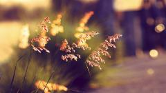 Summer Bokeh Wallpaper 33933