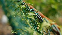 Vegetation On Fence Wallpaper 44803
