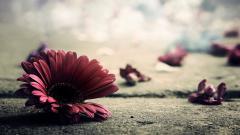 Vintage Flowers 14869