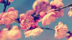 Vintage Flowers 14872