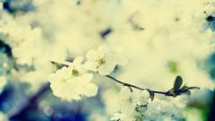 Vintage Flowers 14873