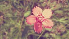 Vintage Flowers 14875