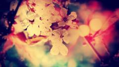 Vintage Flowers 14876