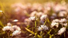 Vintage Flowers 14880