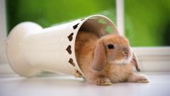 Wonderful Bunny Wallpaper 41770