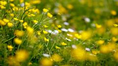 Yellow Flowers Wallpaper 44640