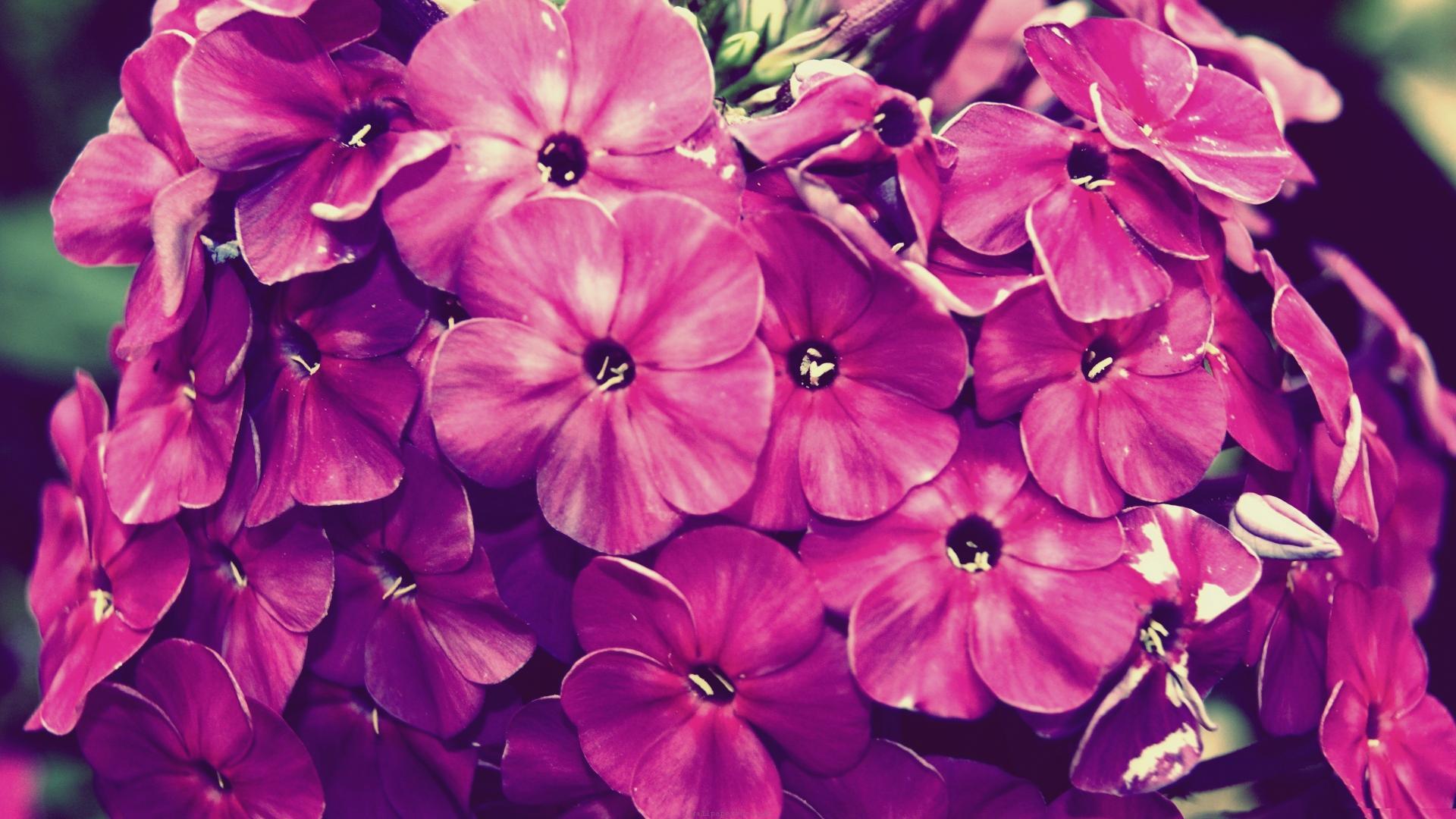 vintage flowers 14874