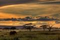 African Safari 3383