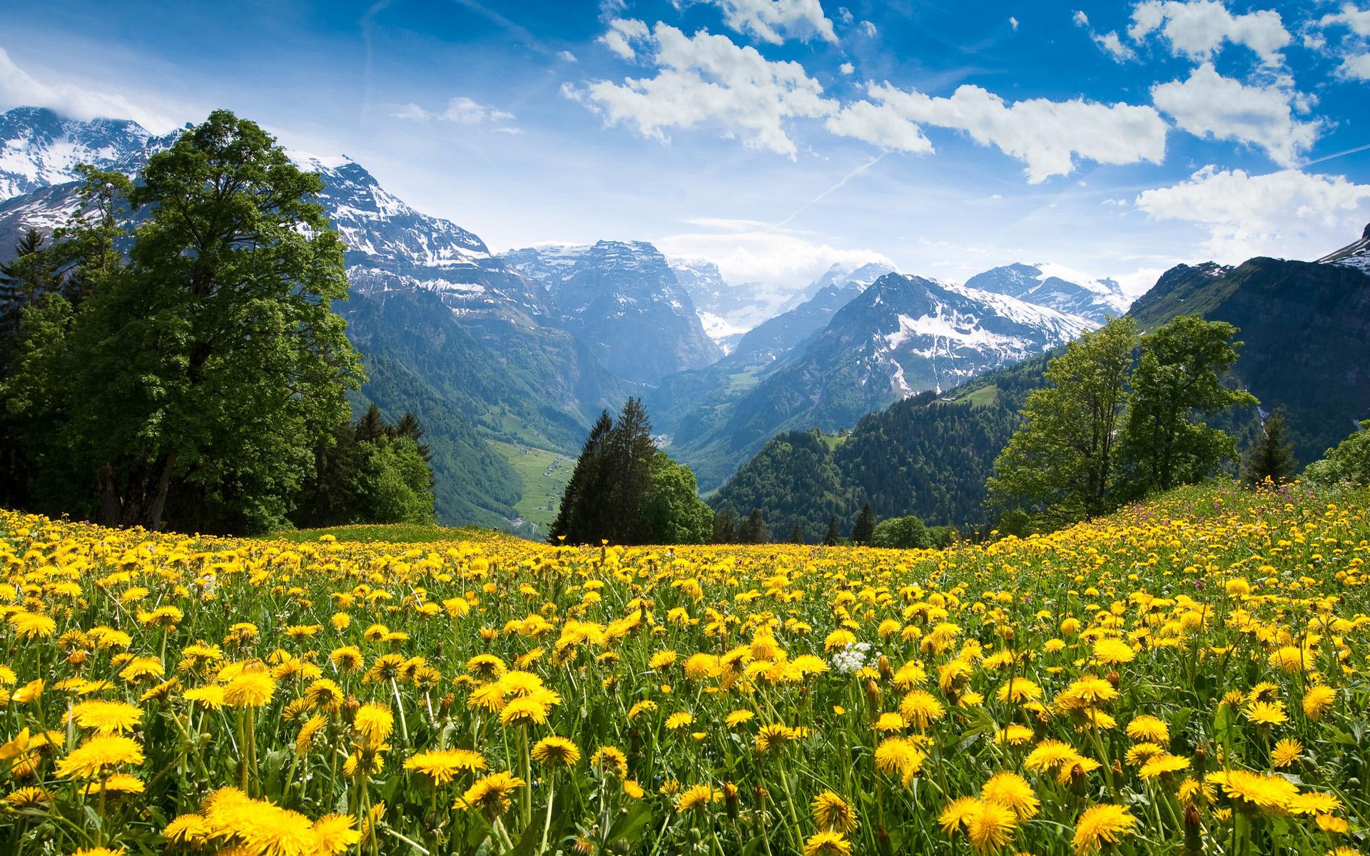 amazing summer scenery wallpaper 34575
