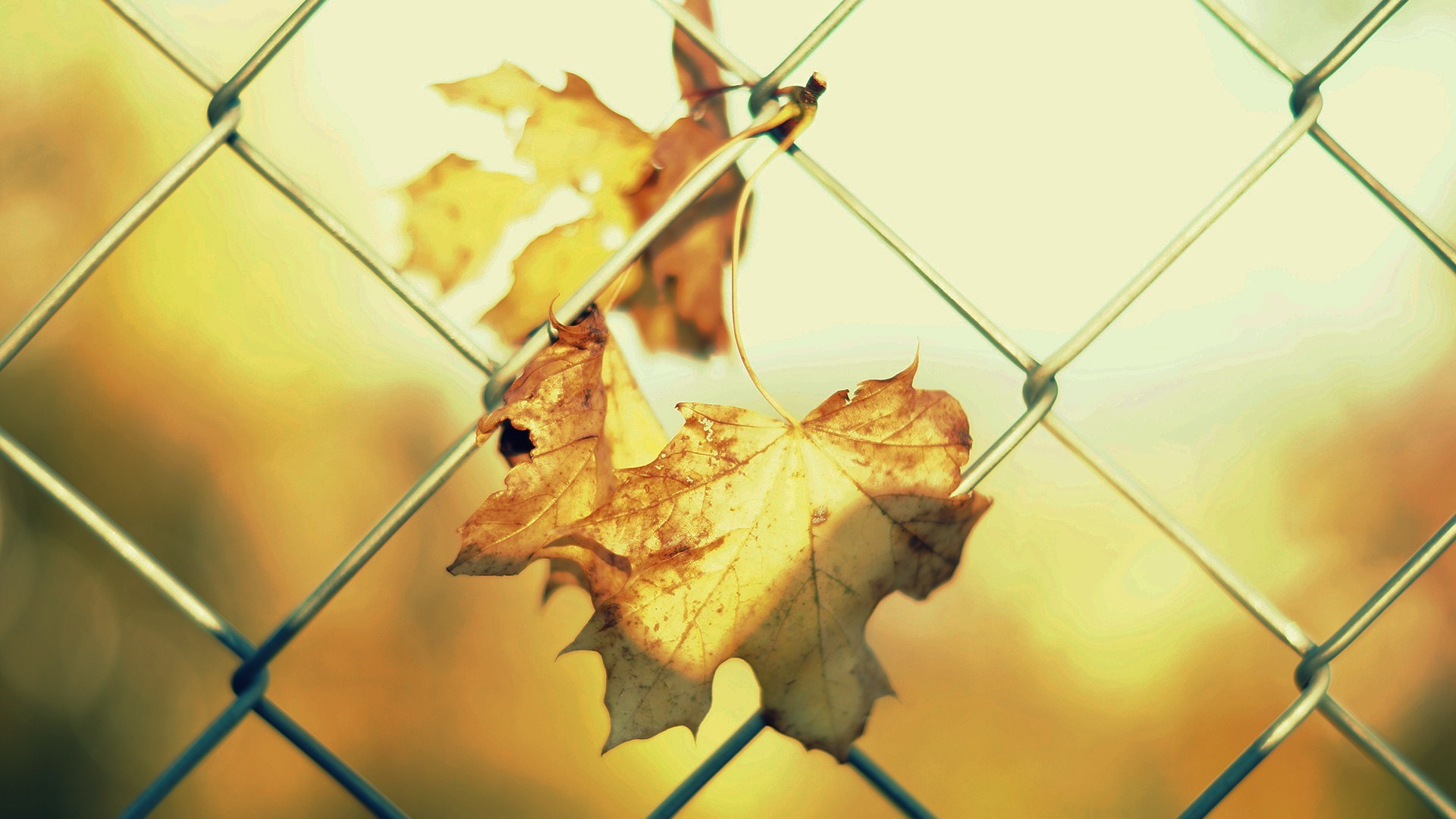 cool fence wallpaper 31684