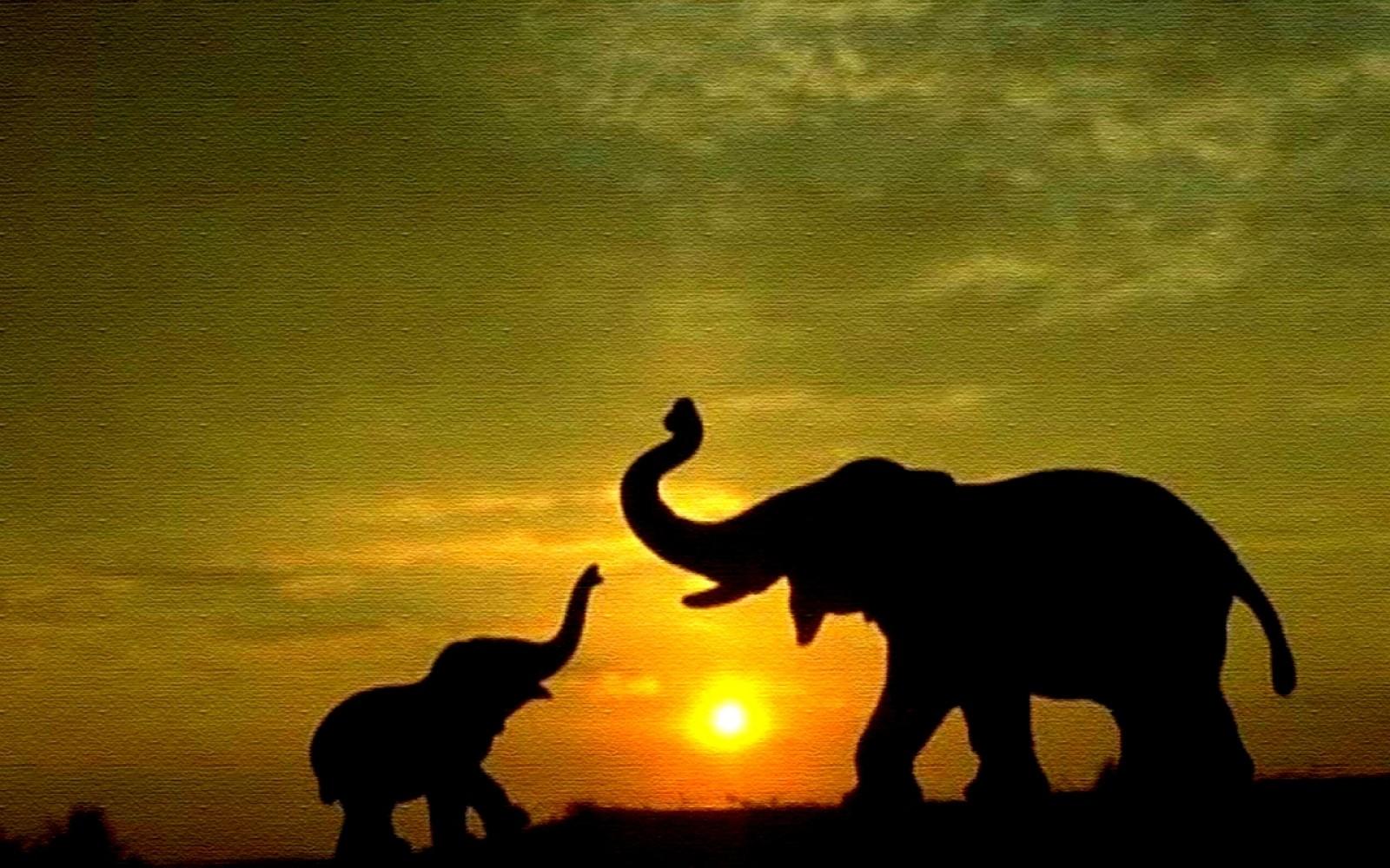 elephant wallpaper 10462