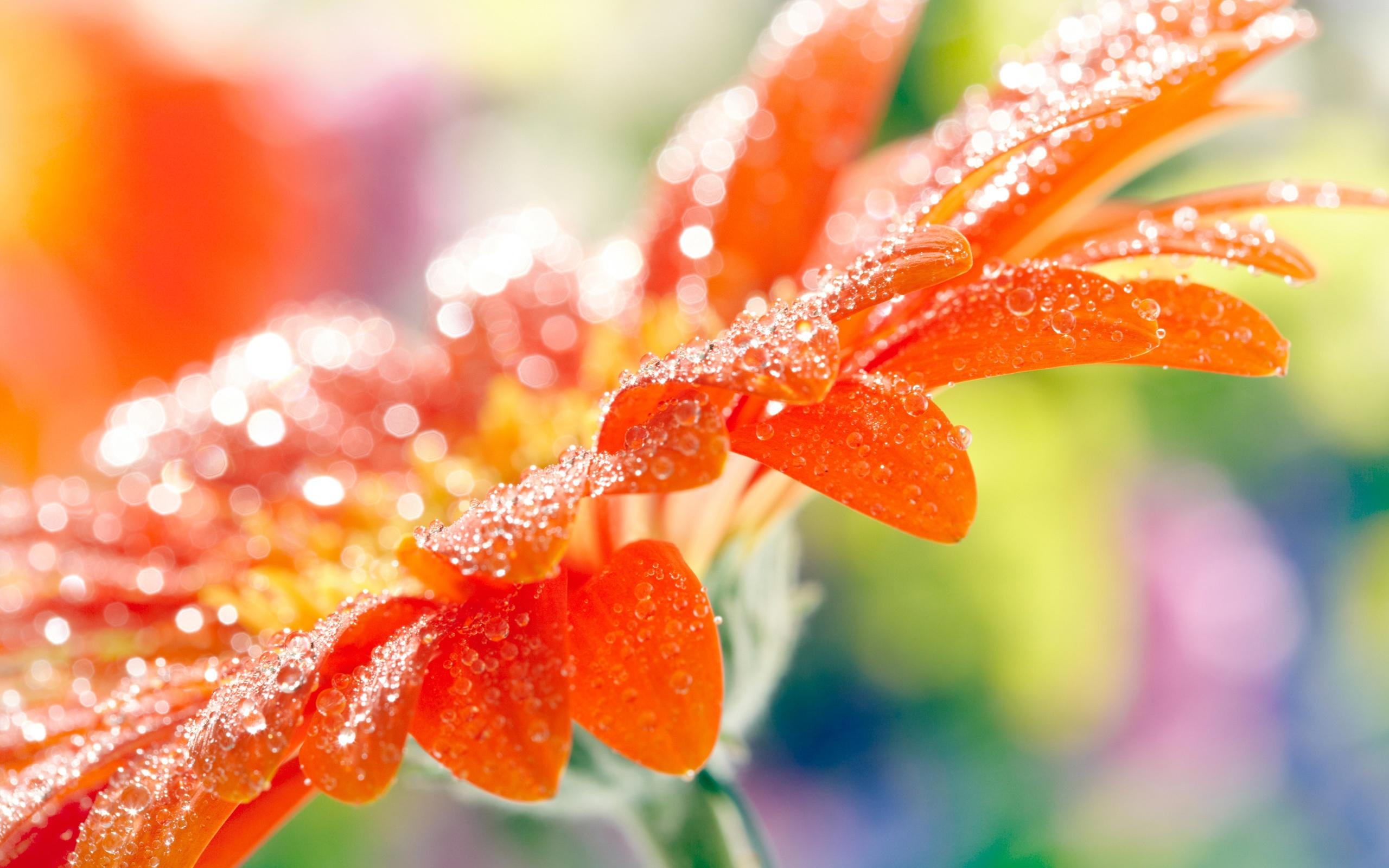 fantastic orange macro wallpaper 38099