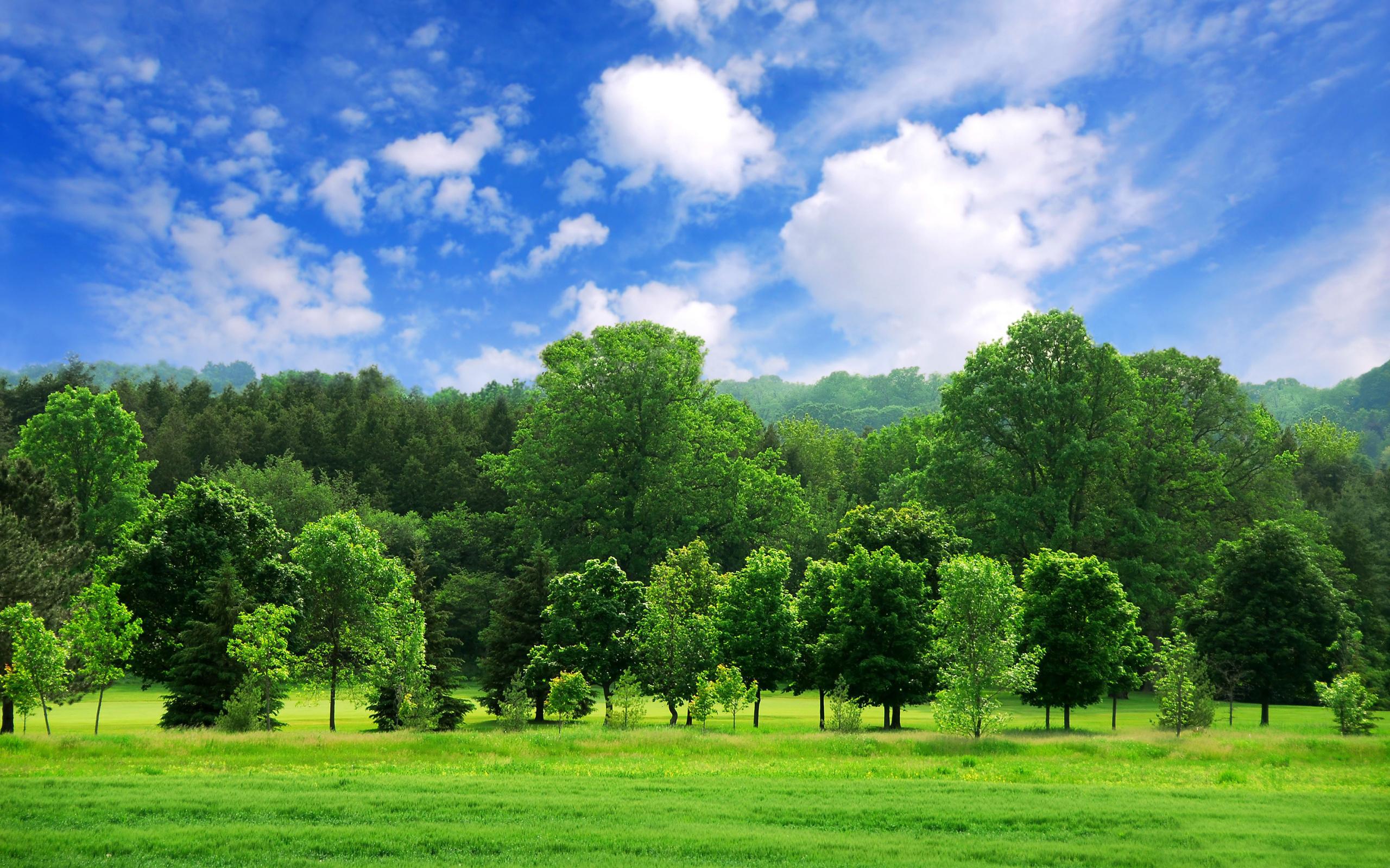 Green landscape 16046 2560x1600 px for Landscape photos