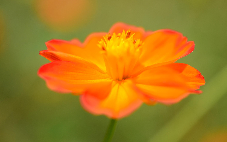 orange macro background 38104