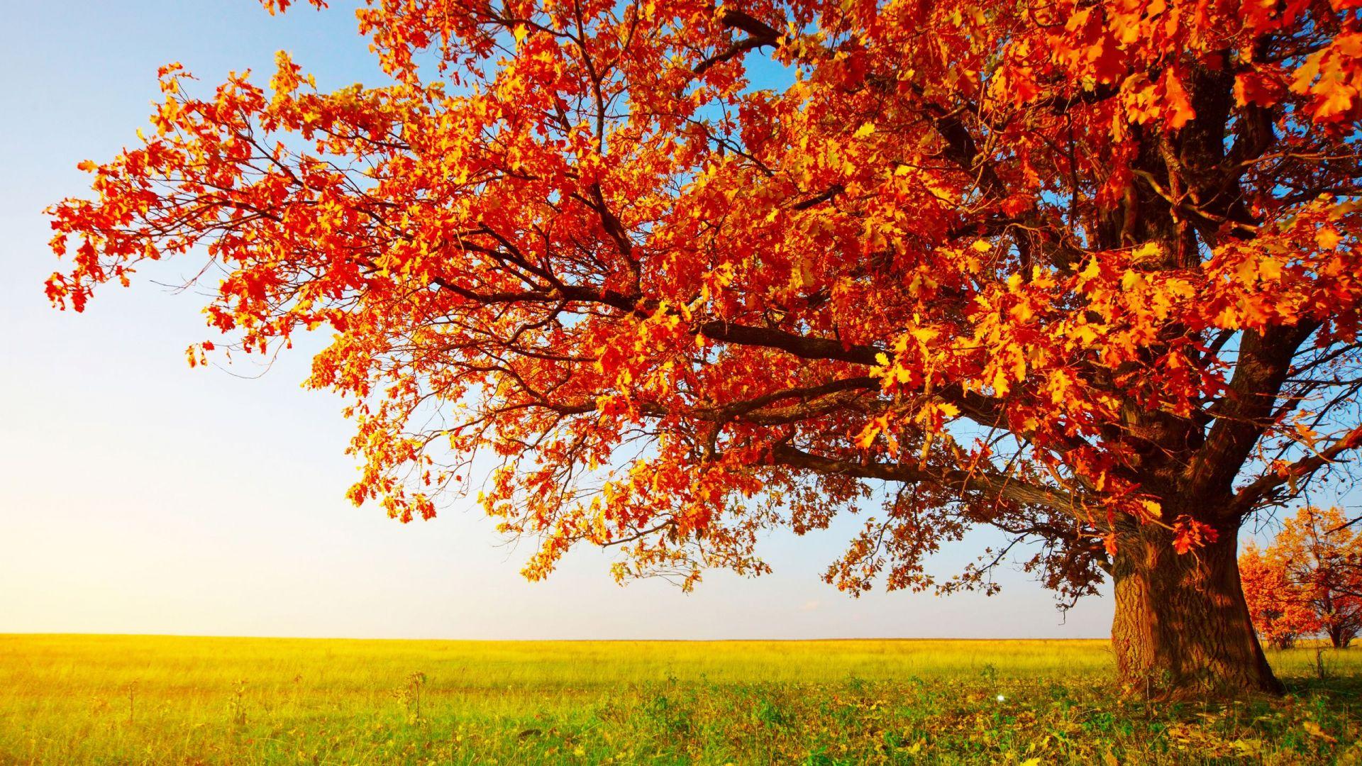 orange tree 33488