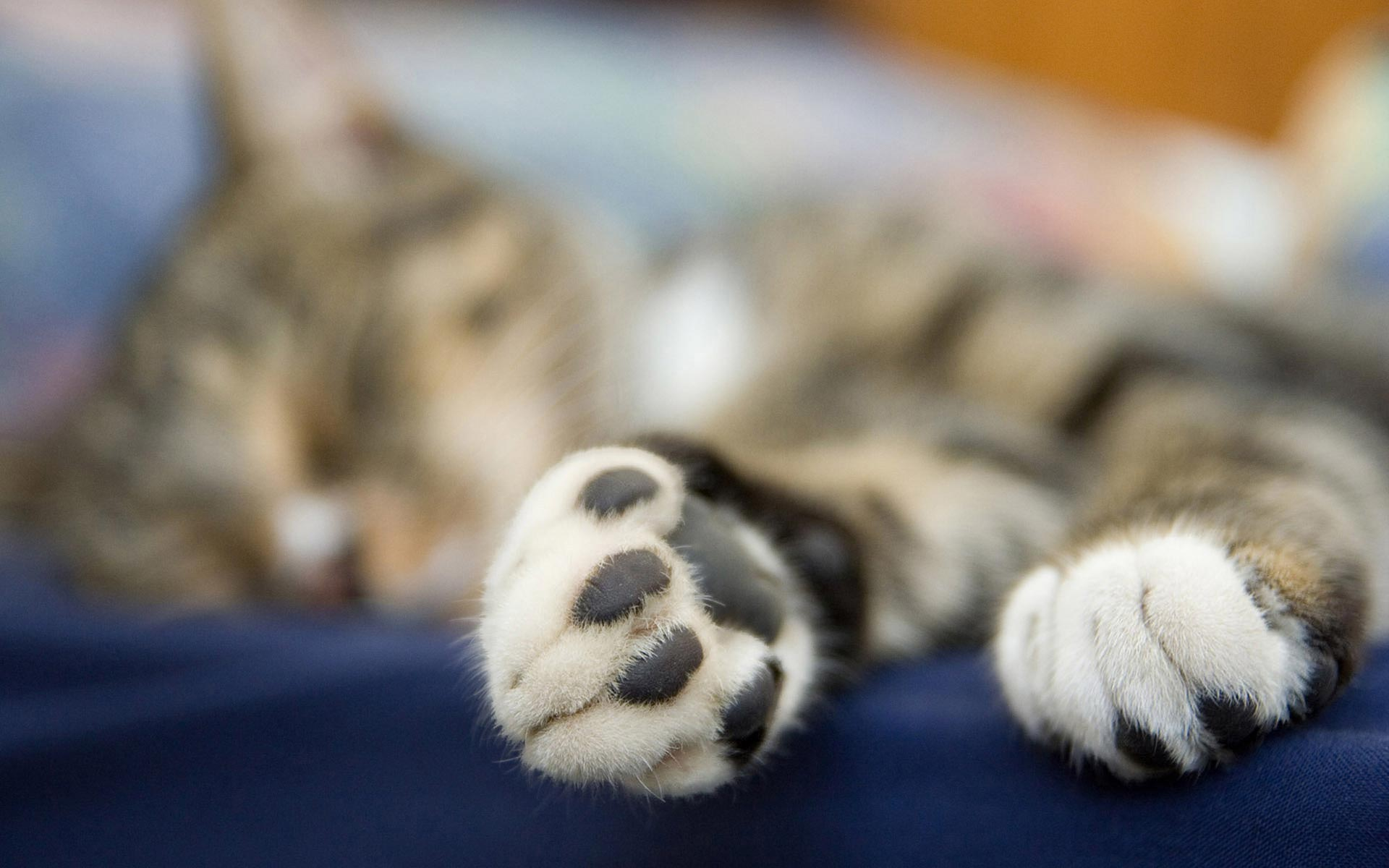 paws wallpaper hd 45079
