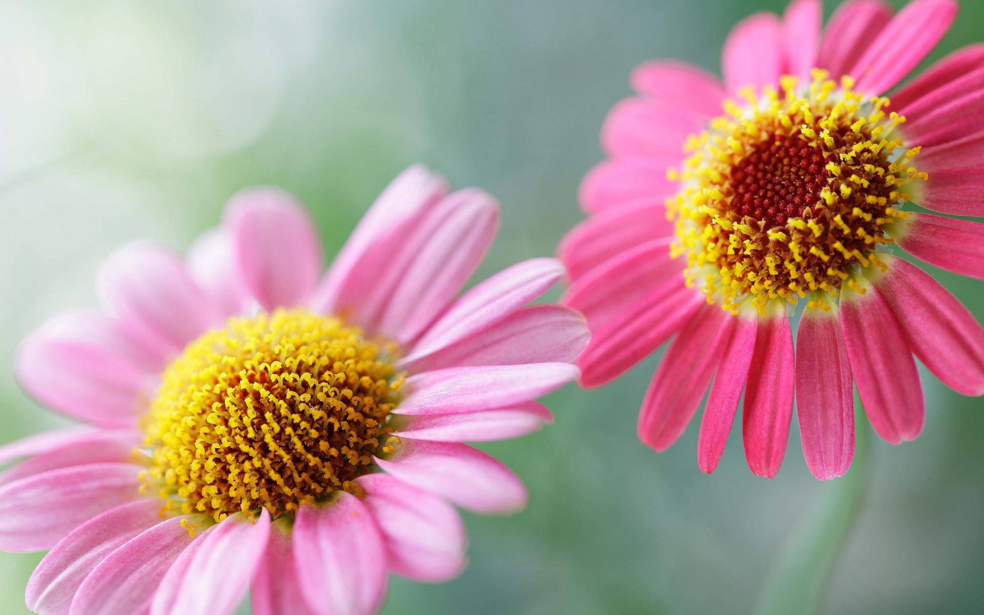 pink flowers wallpaper hd 44651