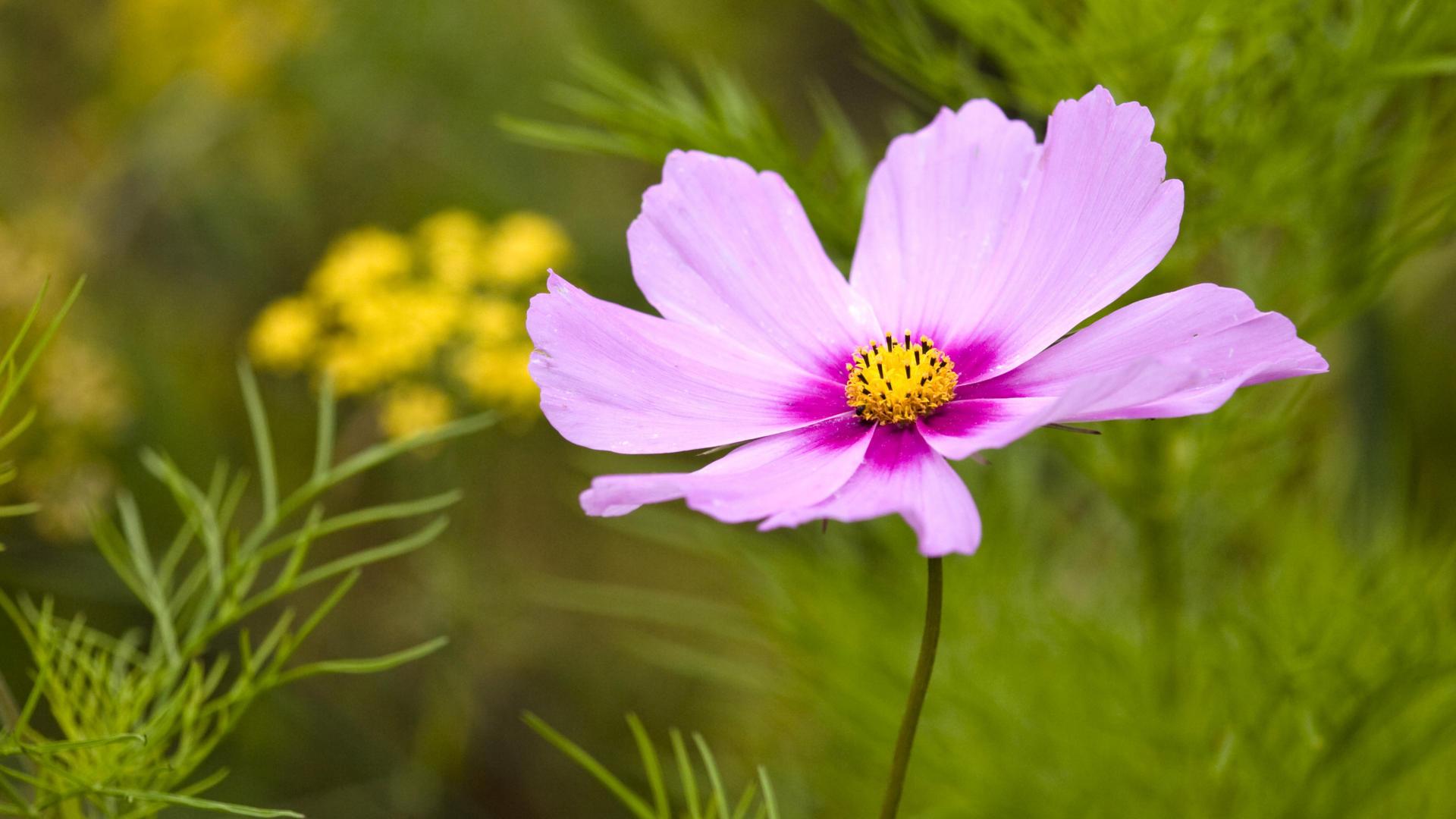 Purple Flower px HDWallSource