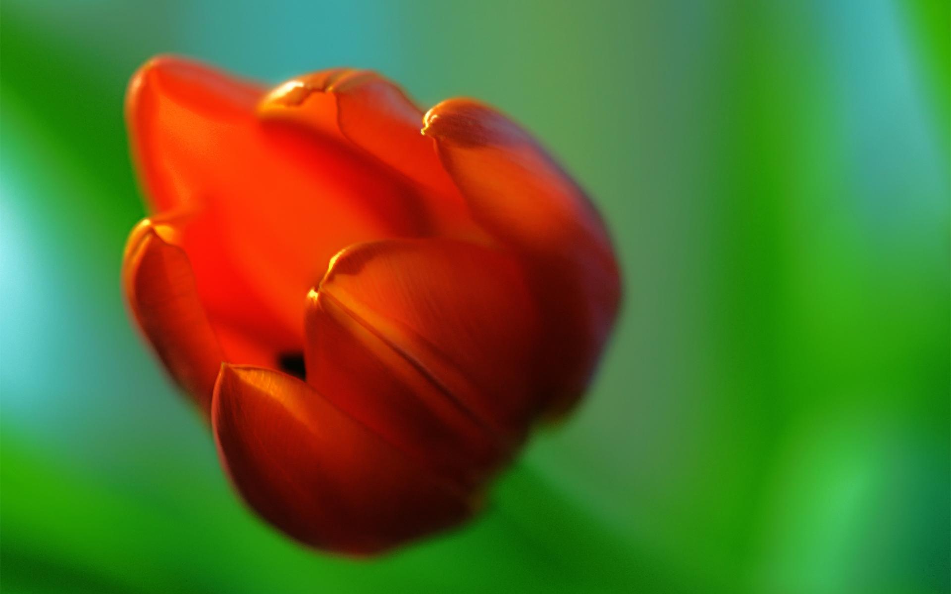 red macro hd 37668