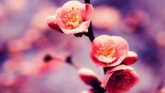 Beautiful Springtime Wallpaper 36861