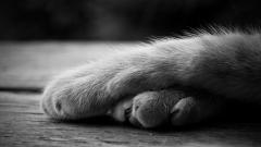 Cat Paws Wallpaper 45075