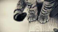 Cat Paws Wallpaper 45076