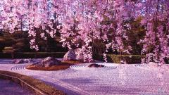Cherry Blossom 8880