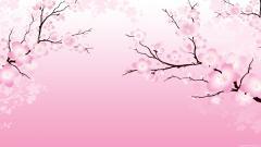 Cherry Blossom Wallpaper 6558