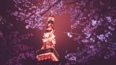 Cherry Blossom Wallpaper 6567