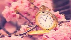 Cherry Blossom Wallpaper 6569