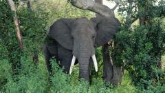 Elephant Wallpaper 10464