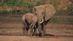 Elephant Wallpaper 10466