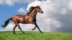 Free Horse Wallpaper 19884