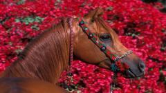 Free Horse Wallpaper 19887