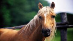 Free Horse Wallpaper 19891