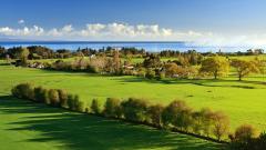 Green Landscape 16041