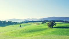 Green Landscape 16042