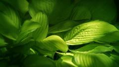 Green Landscape 16043