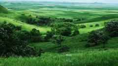 Green Landscape 16044