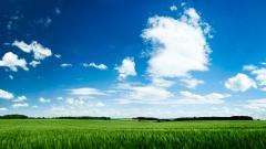 Green Landscape 16045
