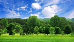 Green Landscape 16046