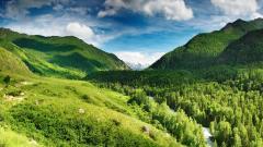 Green Landscape 16048