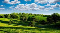 Green Landscape 16051