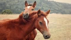 Cute Horses Wallpaper Background 24965