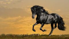 Horses 24966