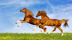 Horses 24967
