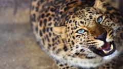 Leopard Background 18406