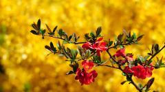 Lovely Springtime Wallpaper 36871
