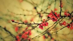 Lovely Wallpapers 28301